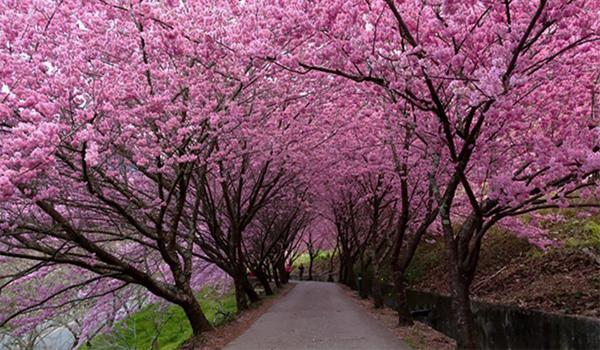 Những miền đất tuyệt vời bạn nên đến vào mùa xuân