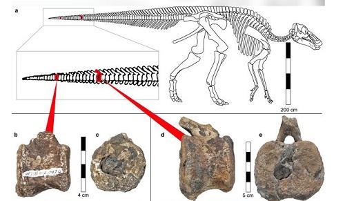Sốc: khủng long 66 triệu tuổi sở hữu thứ tưởng chỉ có ở con người