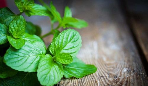 10 lợi ích cho sức khỏe nếu dùng lá bạc hà mỗi ngày