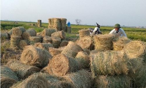 Phụ phẩm nông nghiệp Việt Nam có thể mang lại giá trị 4-5 tỷ USD/năm